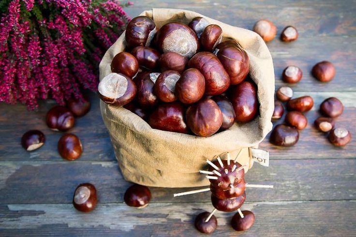 kasztany jesienią