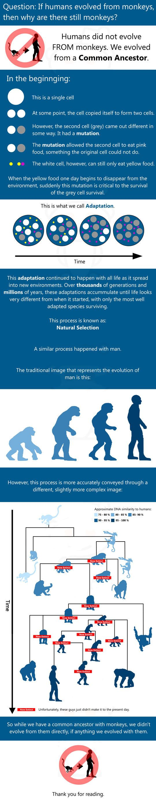 Humans did not evolve from monkeys and I seriously wish more ignorant assholes around here understood evolution.  I should print this out and post it around this bible thumping town.