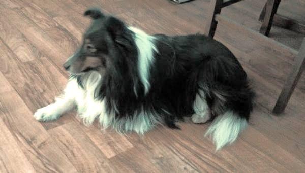 Lost Dog Braeside Ontario On Canada L43149 Losing A Dog Dogs Losing A Pet