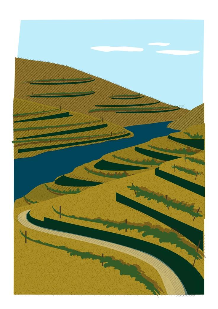 Vale do Douro Vinhateiro | Douro Valley Vineyard  - Portugal