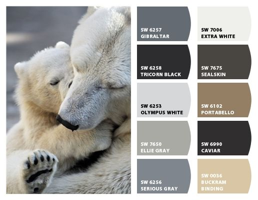 Polar Bear Color Palette Inspiration For Exterior Craftsman Home Paint Scheme Stone