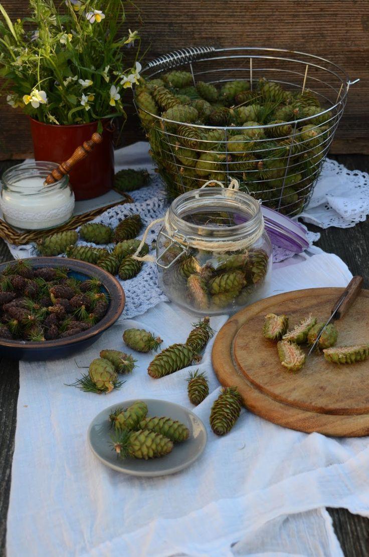 Przełom maja i czerwca to dobry czas aby zaopatrzyć się w zielone szyszki modrzewia i wzbogacić swoją domową apteczkę o naturaln...