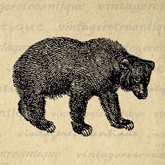 Digital Graphic Bear Image Animal Download Bear Printable Illustration Vintage Clip Art Jpg Png Eps 18x18 HQ 300dpi No.4148 @ vintageretroantique.etsy.com
