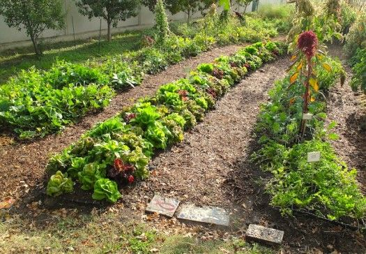 design, Permaculture design course and Permaculture garden