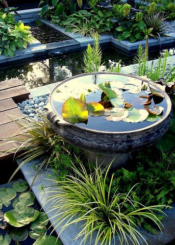 71 best container ponds for water gardening in small for Garden pond specialists