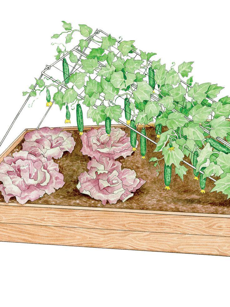 Best  Cucumber Trellis Ideas Only On Pinterest Permaculture - Vegetable garden trellis ideas