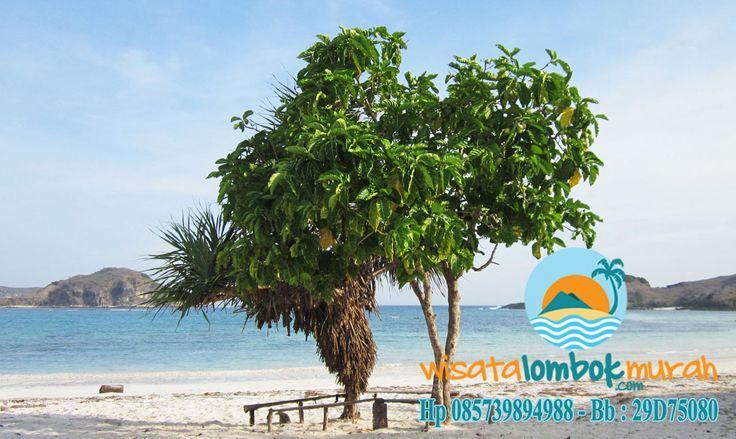 Pemandangan di objek wisata pantai kuta Lombok