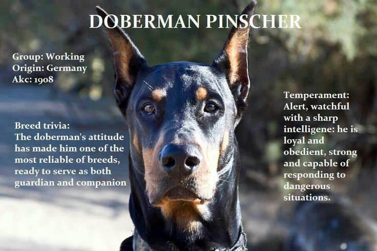 this is why we keep a Doberman