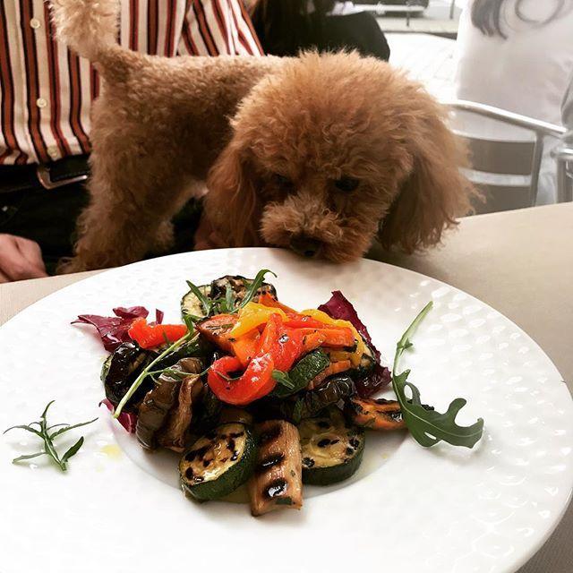 グリルした野菜のマリネ  ズッキーニ  ナス  パプリカ(赤&黄)  トレビス  ルッコラ  エリンギ  にんじん  オリーブオイル  グリル野菜、私は大好き😘です。 夏野菜はグリル向きなので、お肉やお魚と 合わせて、どんどん食べたいと思います! ワンちゃんは、ムリかも。。。🙏 #rizap  #ライザップ入会金無料  #ライザップ  #筋トレ女子  #ボディメイク  #肉体改造  #ライザップ紹介  #ライザップごはん  #野菜  #野菜たっぷり  #グリル  #ヘルシー  #愛犬  #アラフィフダイエット  #食事記録  #トイプードル  #トイプードルレッド  #トイプードル男の子