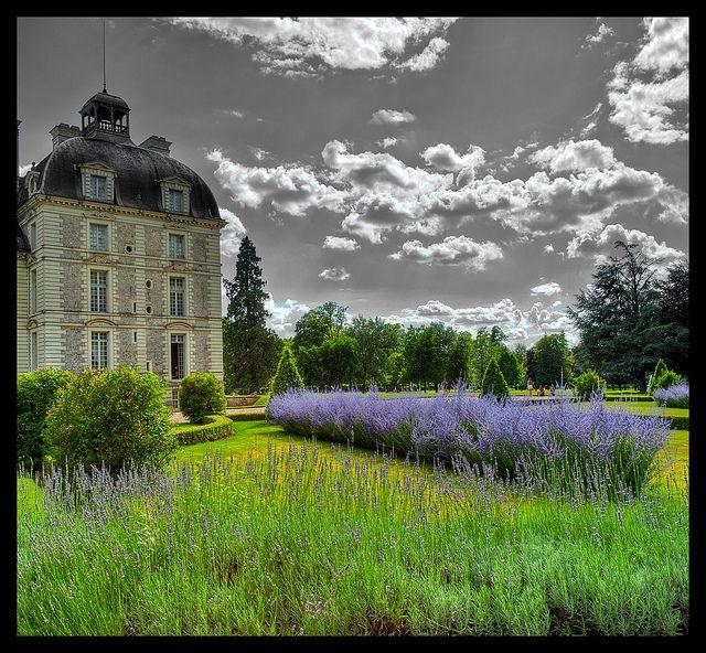Château de Cheverny - Lavender gardens