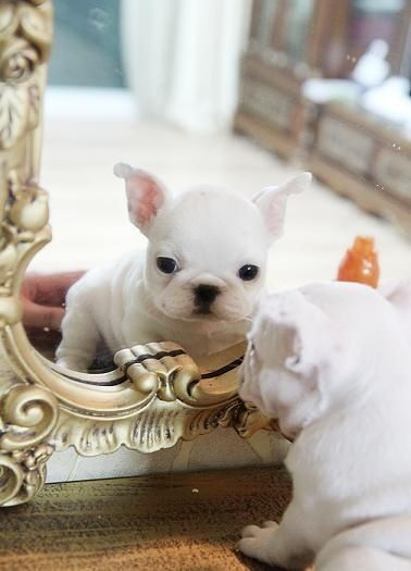"""""""Mirror Mirror on the wall, who's the cutest of them all,"""" sang little Tinker.  She's awfully cute...  ~~  Houston Foodlovers"""