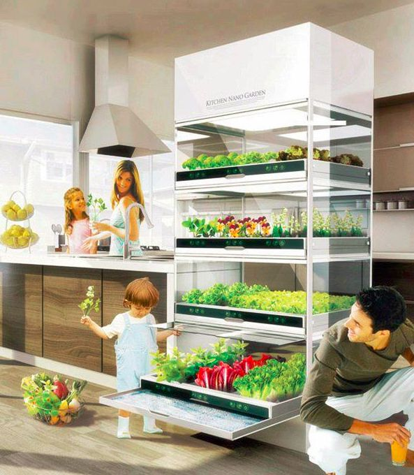 Home Kitchen Hydroponic Garden