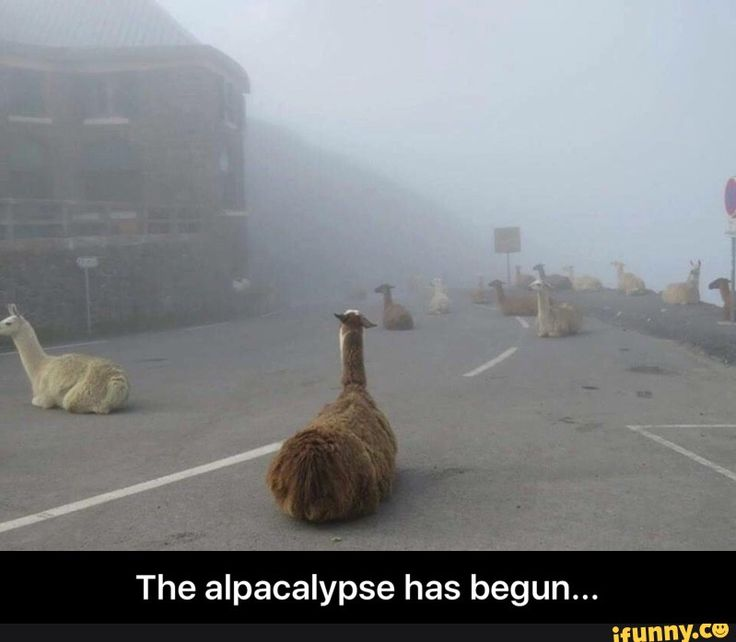 LOL ... except those are llamas but still hilarious haha
