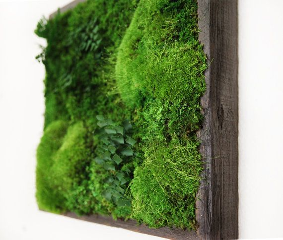 Artisan Moss® Plant Painting® Moss And Ferns In Reclaimed Wood Frame. No  Maintenance Green Wall Art. Part 82
