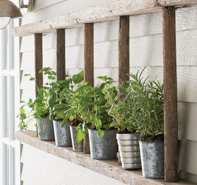 Herb garden on horizontal ladder. If you still have a ladder we can fix it on a wall