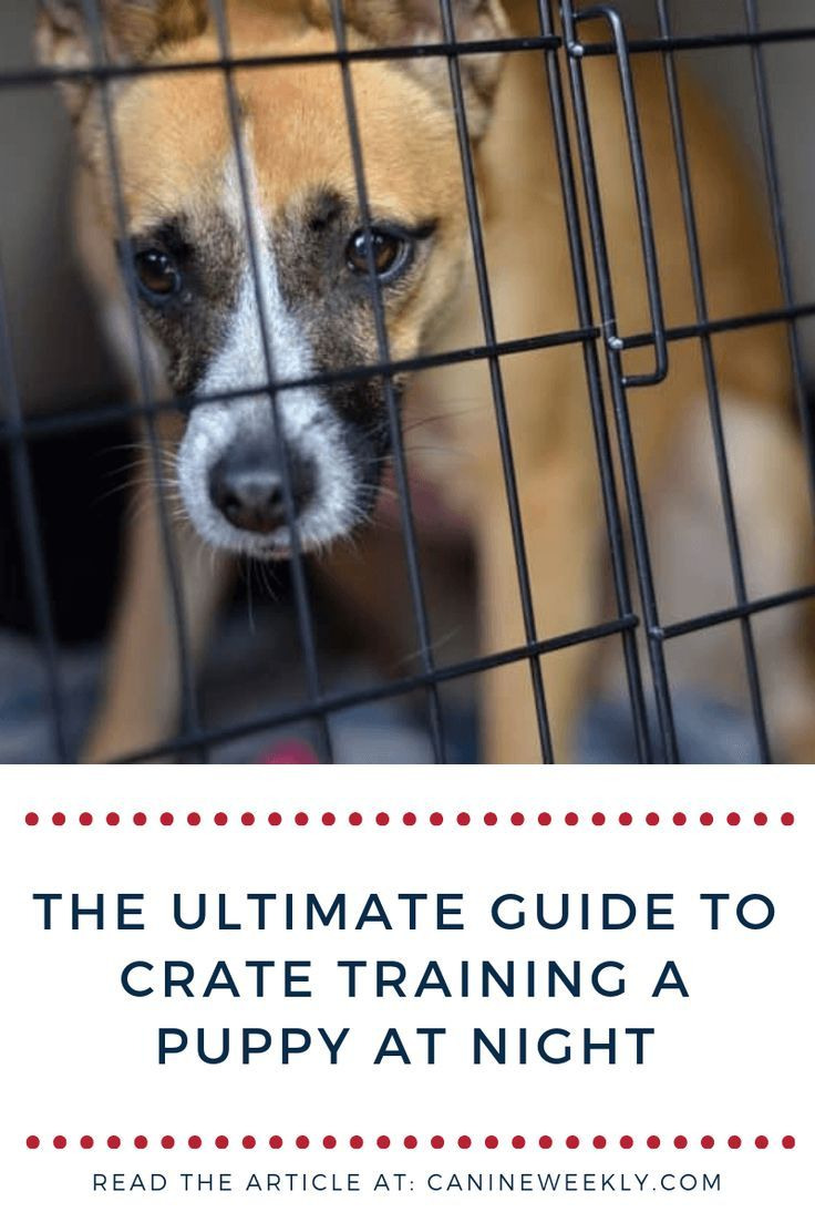 How To Train A Puppy Not To Cry In The Crate At Night Training