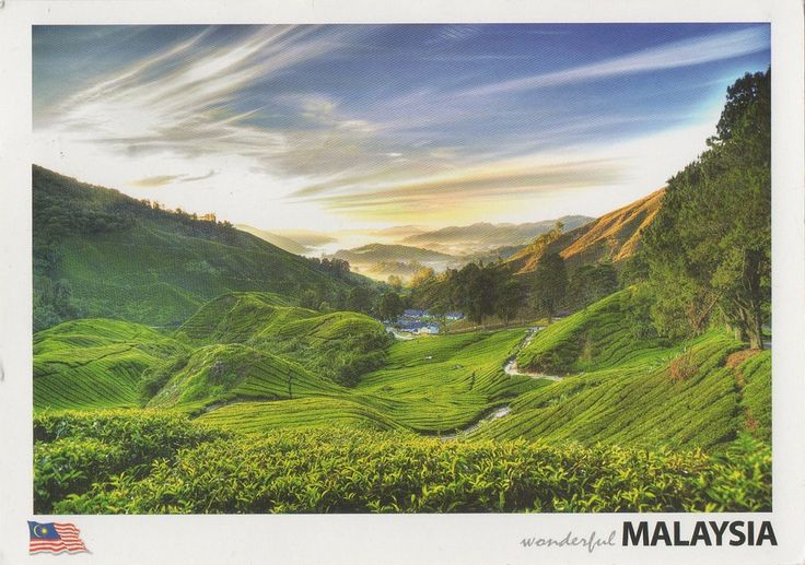 Swap - Arrived: 2017.08.08   ---    The Cameron Highlands is situated in Pahang, West Malaysia. The Cameron Highlands is one of Malaysia's most extensive hill stations. It covers an area of 712km², about the size of Singapore, At an elevation from 1135m to 1829m above sea level, it is also the highest point in Malaysia accessible by road with Gunung Brinchang 2031m above the sea. During the day, the temperature seldom rises above 25°C; at night, it can drop to as low as 12°C.