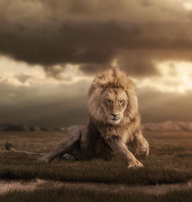 King | Photo by ©Harry Schindler #WildlifePlanet