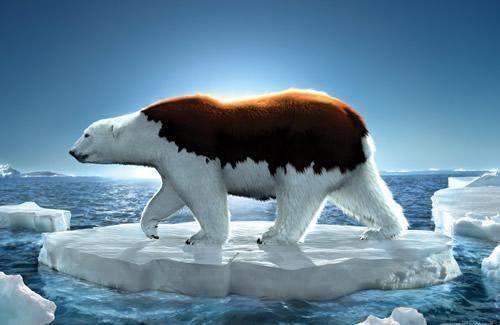 global-warming-poster-designs-26