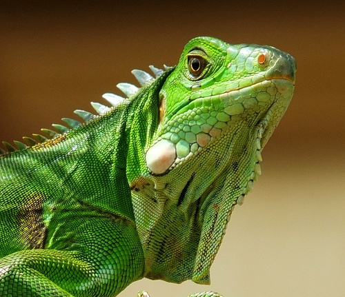 Llbwwb Green Iguana By 2mag7 Non Stop Catching Up