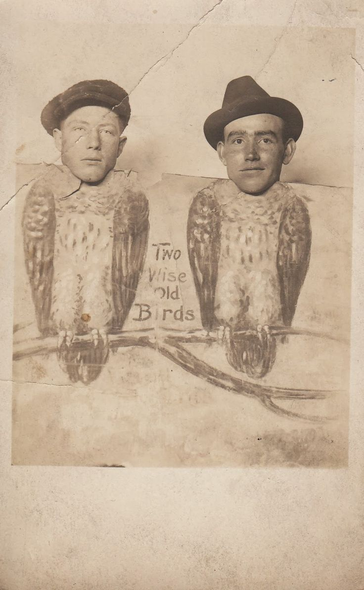 Dull tool dim bulb two wise old birds comic foreground real photo postcard and