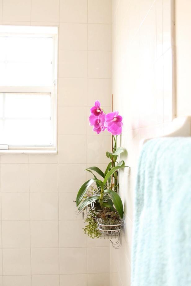 Make a Shower Caddy Garden Sandra Pierce