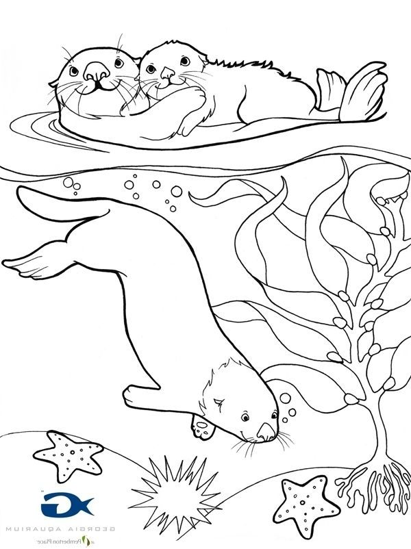 Sea Otter Coloring Page Bird Coloring Pages Detailed Coloring