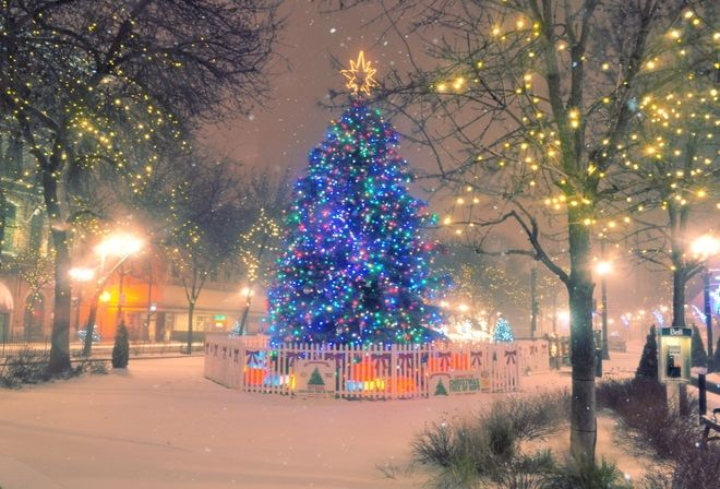 A gorgeous Christmas tree in my Brother's home town of Hamilton, Ontario, Canada.  :-D
