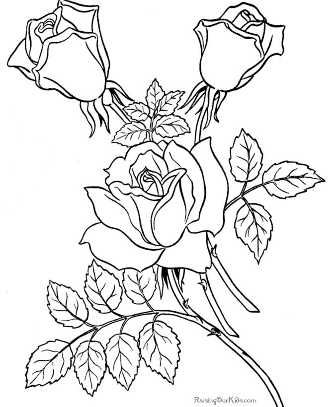 Coloring Pages Of Roses Coloring Page | P Rose Coloring Pages Print Coloring Pages