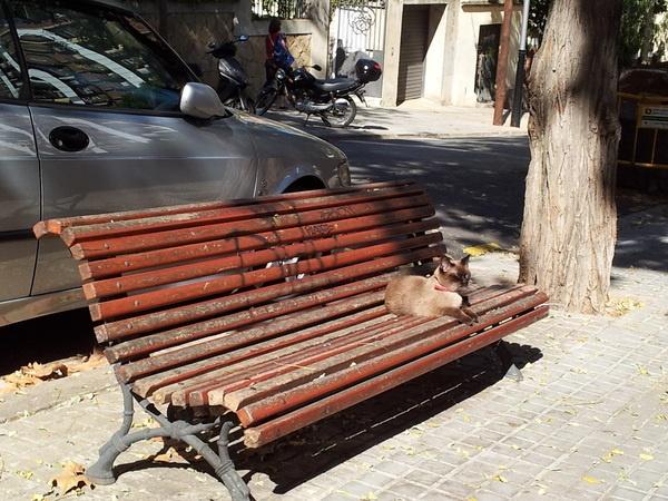Gato en el banco #Barcelona