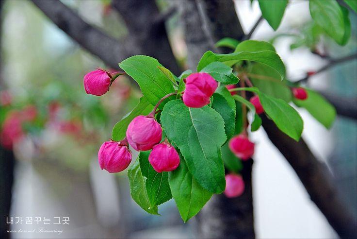 꽃봉우리 | 사용자 삽입 이미지