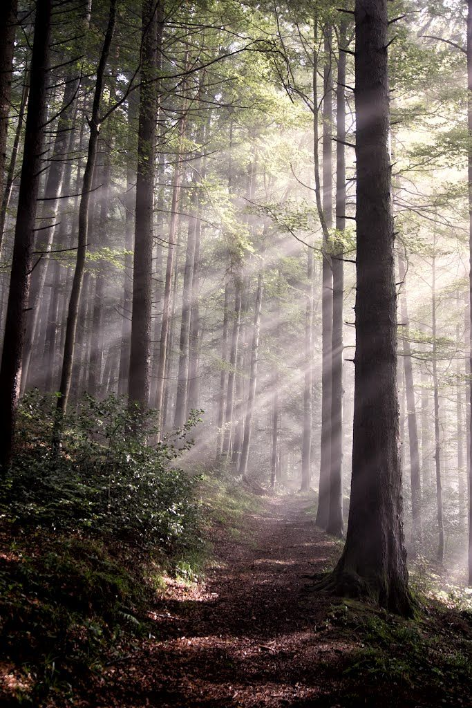 Woods by Urban Thaler: 'I only went out for a walk, and finally concluded to stay out till sundown, for going out, I found, was really going in.' ~ John Muir #Photography #Deep_Woods #John_Muir