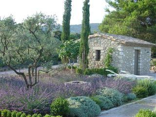 mediterranean garden with lots of lavender                                                                                                                                                                                 Plus