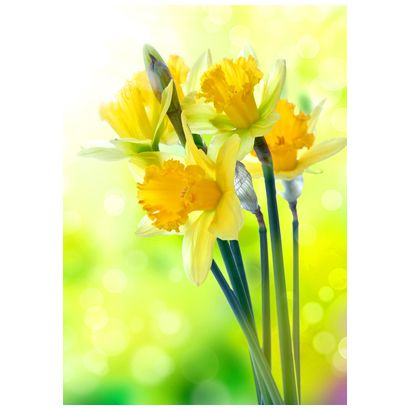 Daffodils #postcards