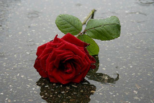 meet you in the falling rain mama fus