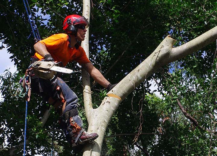 What Is An Arborist What Does An Arborist Do In Technical Terms An Arborist Might More Accurately Be Called An Arboricu Arborist Tree Service Tree Surgeons