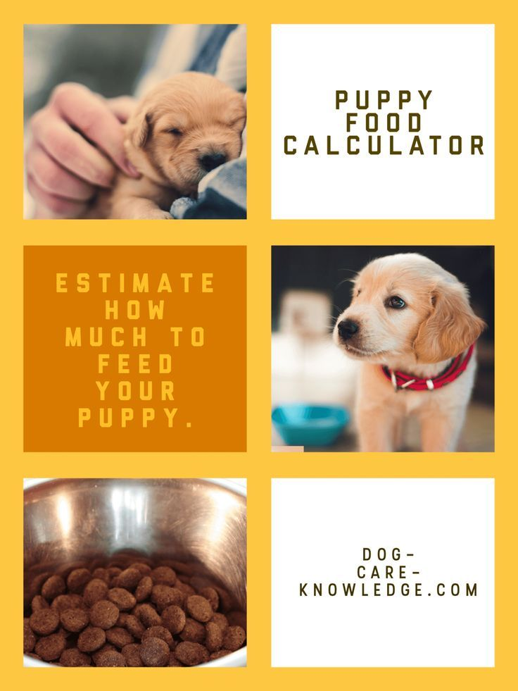 Simple Puppy Feeding Schedule You Absolutely Need Puppy Feeding