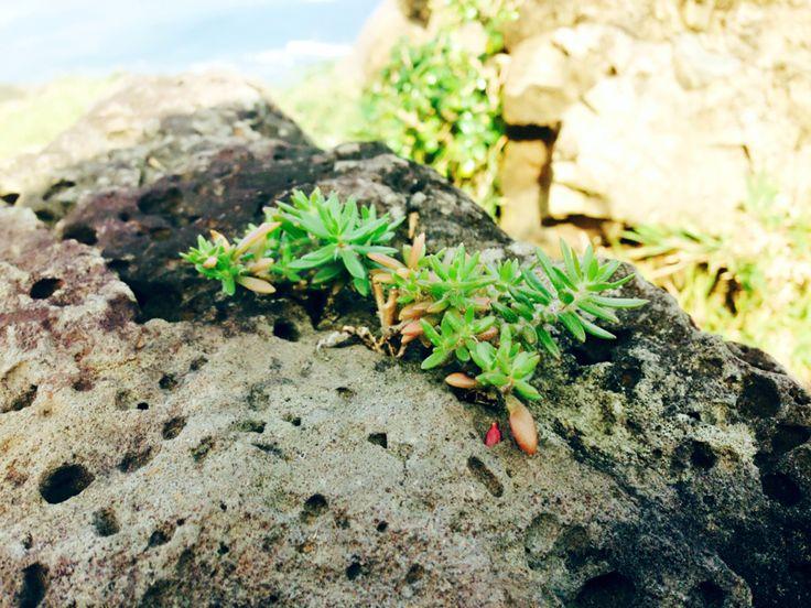 Hoa trên đá