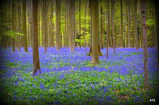 Hiacyntowy las jak z bajki - KTX - z rodzinnego natatnika Doroty i Tomka