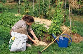 Le paillage, qui consiste à recouvrir le sol,apporte de nombreuses solutions pour faire des économies et surtout ne pas avoir besoin d'utiliser de produits phytosanitaire. Encore faut-il bien savoir le mettre en oeuvre…