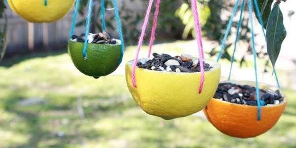 mangiatoie uccelli agrumi