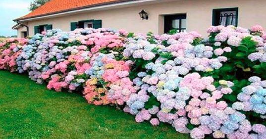 Questo semplice concime domestico, garantirà ai tuoi fiori e piante la fioritura rapida e un lussureggiante fogliame – cosedadonna.net
