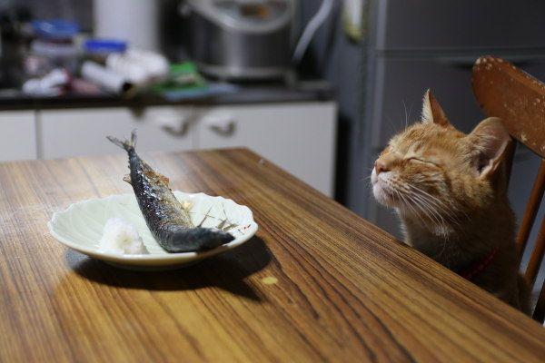 2017.10.10 秋刀魚