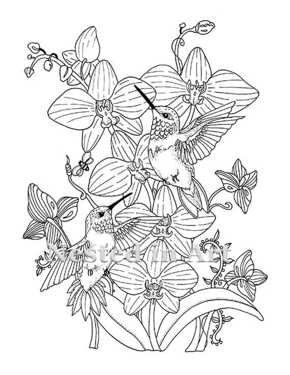 Adult Coloring Page Hummingbirds And Orchids Digital Download