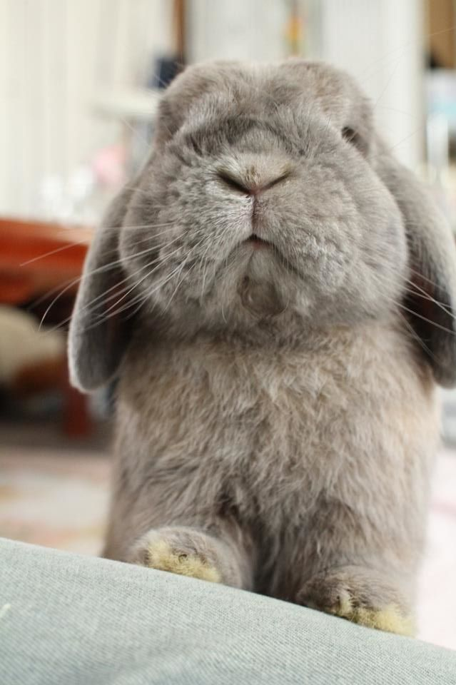 :: bun bun ::: Rabbit, Sweet, Funny Bunnies, Animal Baby, Grumpy Bunnies, Cute Bunnies, Baby Animal, Carrots, Grumpy Cat