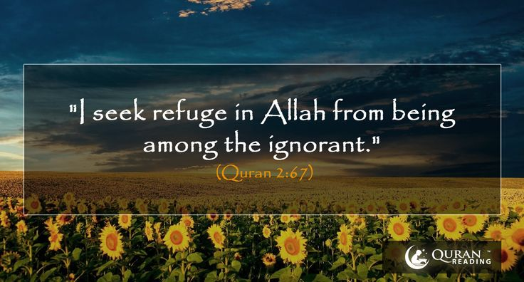 """I seek refuge in Allah from being among the ignorant."" (Quran 2:67)  #Quran #Pray #Islam"