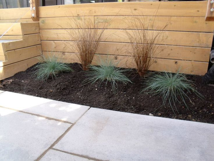 Home owners wanted to soften the landscape, but wanted a zero maintenance softscape. We decided to use ornamental grasses with plenty of mulch.