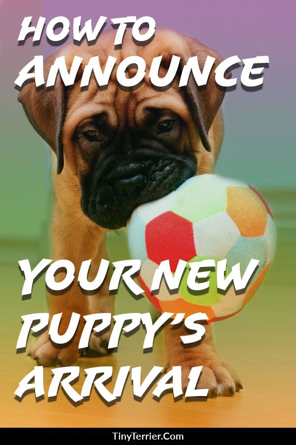 15 Adorable Puppy Announcement Ideas Puppy Quotes New Puppy