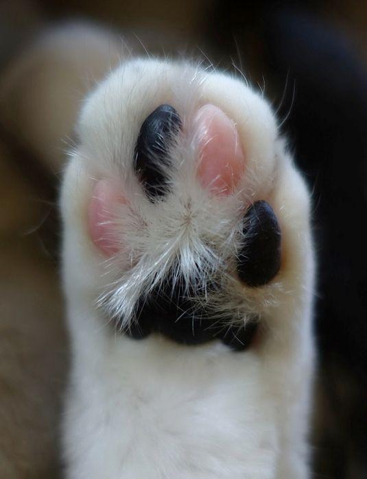 кошачьи лапы фото