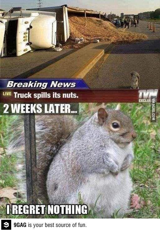 Nut humor